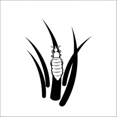 (English) Inside the Life of a Louse